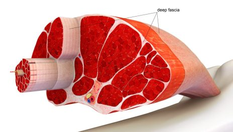 deep-fascia